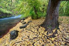 Rio Utá do esconderijo na queda Fotografia de Stock