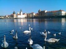Rio Vltava da república checa de Praga no verão Fotos de Stock Royalty Free