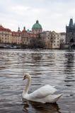 Rio Vltava Praga Foto de Stock