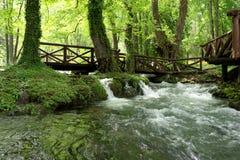 Rio Vrelo, tributário direito do rio Drina Imagem de Stock