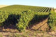 Rioja葡萄园 图库摄影