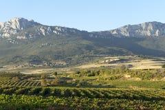 Rioja葡萄园  免版税库存照片