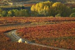 Rioja de La en automne Photographie stock libre de droits