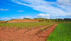 Rioja-Weinbergfelder auf die Art von St James stockbilder