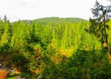 Rios da montanha nas florestas perto de Vanc?ver Em setembro de 2014 Columbia Brit?nica, Canad? imagem de stock