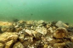 Rios subaquáticos dos seixos e lagos de água doce, seixos no leito fluvial fotografia de stock