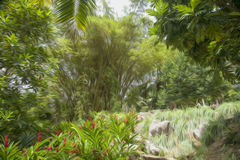 A riot of greenery blurry brush oil Royalty Free Stock Photography