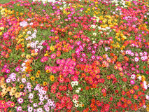 Riot Of Colour! Stock Photography