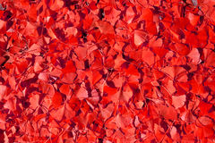 Riot of red. Fallen leaves Stock Photography
