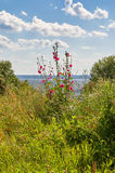 The riot of summer-meadow and flowers over the Volga Russia in the summer noon Stock Image