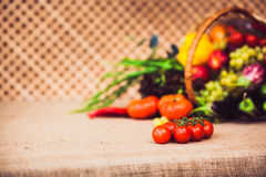 Rip cherry tomatoes on the branch. On the background fresh fruit. And vegetables mix. Warm toned. Horizontal Royalty Free Stock Image