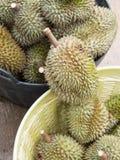 Rip organic durian. Royalty Free Stock Image