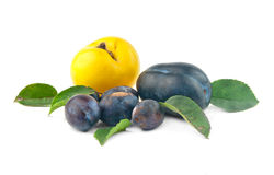 Rip plums Stock Photos
