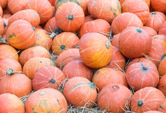 Rip pumpkin pile. Royalty Free Stock Images