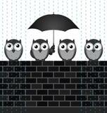 Riparando dalla pioggia Fotografia Stock Libera da Diritti