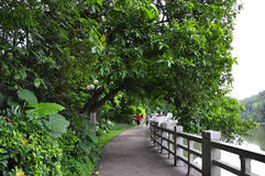 Riparian corridor. Lush woods behind a long riparian corridor Royalty Free Stock Photography