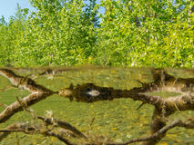 Riparian ecosystem taiga lake shallow shore water Royalty Free Stock Photography