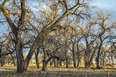 Riparian forest along South Platte River Stock Images