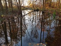 Riparian forest in the north of Berlin in an autumn evening Stock Image