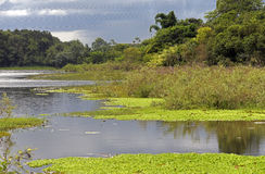 Riparian forest and swampy area Stock Photo