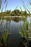 Riparian Pond Reflection Stock Image