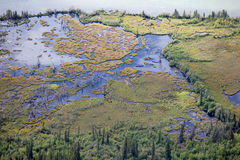 Riparian sub-arctic boreal forest wetland aerial Royalty Free Stock Images