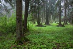 riparian wiosny stojak zdjęcie royalty free