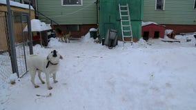 Riparo animale, cani che aspettano i loro nuovi proprietari video d archivio