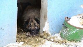 Riparo animale, cani che aspettano i loro nuovi proprietari stock footage