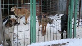Riparo animale, cani che aspettano i loro nuovi proprietari archivi video