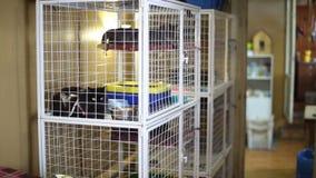 Riparo animale, gatti che aspettano i loro nuovi proprietari archivi video