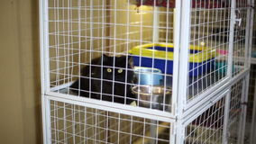 Riparo animale, gatti che aspettano i loro nuovi proprietari stock footage