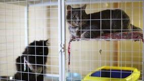 Riparo animale, gatti che aspettano i loro nuovi proprietari video d archivio
