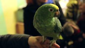 Riparo animale, grande pappagallo a disposizione stock footage