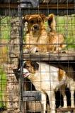 Riparo dei cani Fotografia Stock