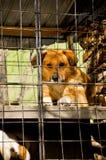 Riparo dei cani Immagine Stock