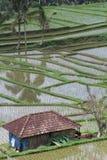 Riparo in risaie di Jatiluwih Fotografia Stock