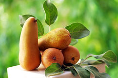 Ripe Abate Fetel pears Royalty Free Stock Photography