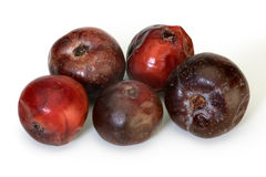Ripe Acerola Stock Images