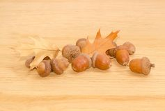 Ripe acorns and autumn oak leaves on a oak planks. Pile of ripe acorns, some of which in their cuplike cupules and two autumn oak leaves on a surface of oak stock photography