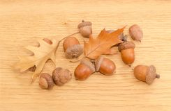 Ripe acorns and autumn oak leaves on a oak planks. Several ripe acorns, some of which in their cuplike cupules and two autumn oak leaves on a surface of oak stock photos