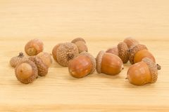 Ripe acorns on a oak planks closeup. Ripe acorns, some of which in their cuplike cupules on a surface of oak planks closeup royalty free stock image