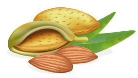 Ripe almonds with leaves Stock Photos