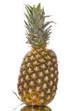 Ripe ananas Stock Photos