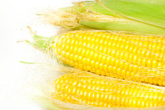 Ripe appetizing corn. Royalty Free Stock Photography