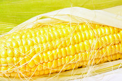 Ripe appetizing corn. Stock Images