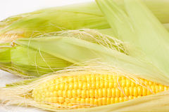 Ripe appetizing corn. Royalty Free Stock Images