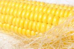 Ripe appetizing corn. Stock Images