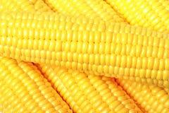 Ripe appetizing corn. Royalty Free Stock Photo