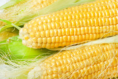 Ripe appetizing corn. Royalty Free Stock Photo
